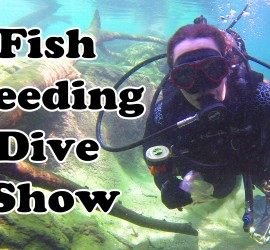 final-flint-riverquarium-tank-dive-thumbnail-for-youtube